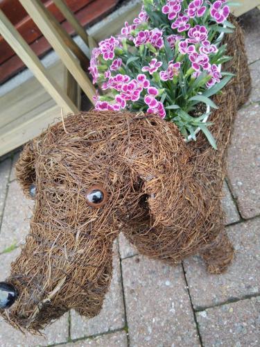 Gorgeous Doggy Planter