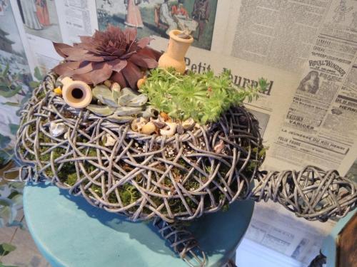 Stunning Turtle Succulent Planter