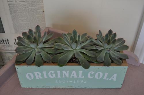 Amazing succulents