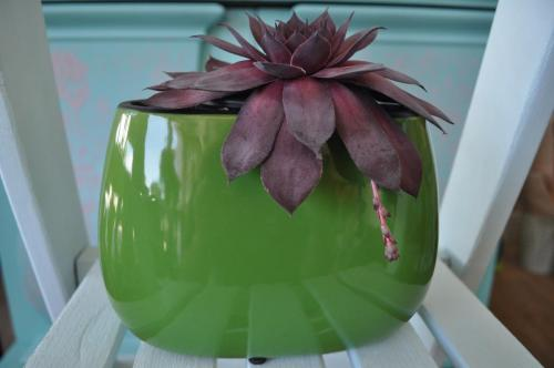 Exclusive ceramic pot - with succulents